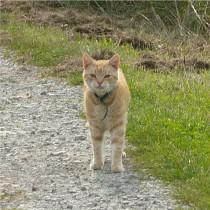 Straßenkatzen28