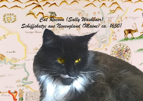 cat-racoonsx
