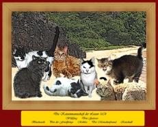 Katzenfreizeit auf Fernando de Noronha